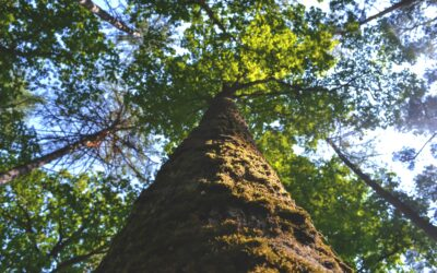 Let's Talk About the Rest of your Tree – Leaves, Trunk and Bark.