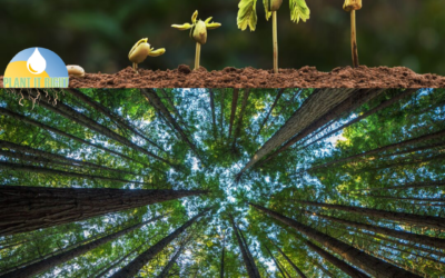 The Life Cycles of Trees